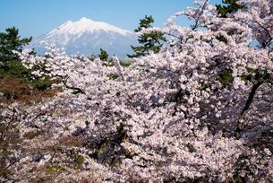 弘前城公園より桜と岩木山の写真素材 [FYI03182952]