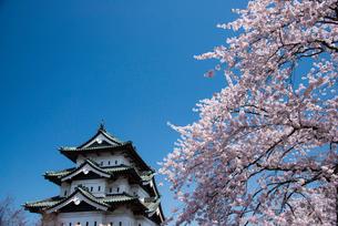 弘前城天守閣と満開の桜の写真素材 [FYI03182967]