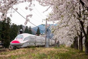 桜並木と秋田新幹線スーパーこまちの写真素材 [FYI03183020]