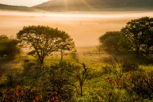 霧流れる霧ヶ峰高原八島ヶ原湿原の写真素材 [FYI03183154]