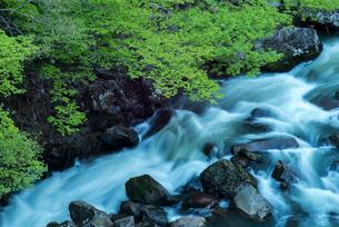 若葉と奈曽川の写真素材 [FYI03183202]