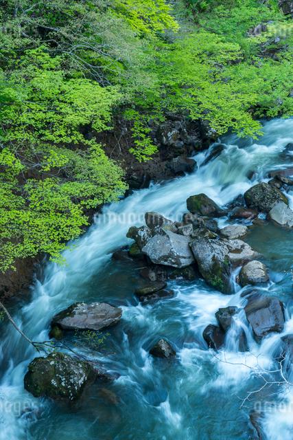 若葉と奈曽川の写真素材 [FYI03183208]
