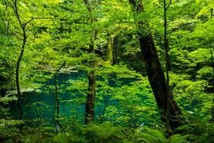 世界遺産白神山地十二湖沸壺の池の写真素材 [FYI03183419]
