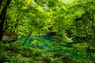 白神山地十二湖沸壺池の写真素材 [FYI03183426]