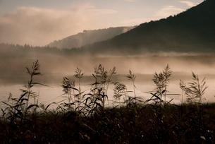 スーパームーンに輝く霧ヶ峰夜霧の八島ヶ原湿原の写真素材 [FYI03183709]