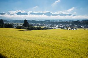 みのる稲穂と八ヶ岳連峰の写真素材 [FYI03183829]