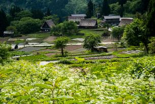 富山県五箇山相倉合掌造り集落の写真素材 [FYI03183962]
