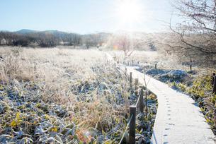 朝日に輝く霜の霧ヶ峰高原と遊歩道の写真素材 [FYI03184372]