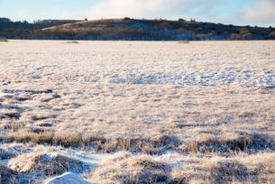 霧ヶ峰高原朝日に輝く霜の八島ヶ原湿原の写真素材 [FYI03184373]
