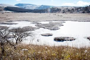 朝日に輝く霜の霧ヶ峰高原八島ヶ原湿原の写真素材 [FYI03184395]