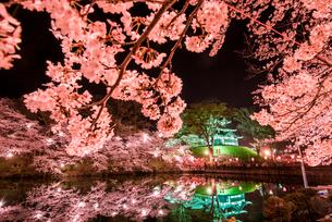 ライトアップの高田城と夜桜の写真素材 [FYI03184583]