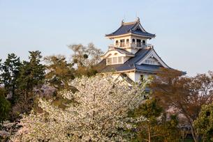 長浜城と満開の桜の写真素材 [FYI03184591]