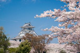 満開の桜と長浜城の写真素材 [FYI03184604]