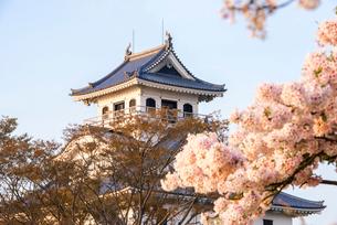 長浜城と満開の桜の写真素材 [FYI03184632]