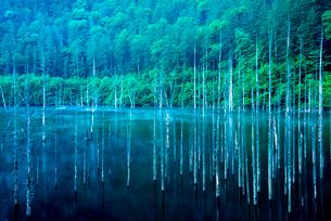 王滝村 蒸気霧流れる自然湖の写真素材 [FYI03184743]