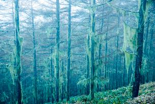 不思議な森の写真素材 [FYI03184828]