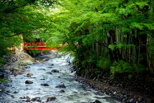 修善寺温泉 桂川の流れの写真素材 [FYI03184896]