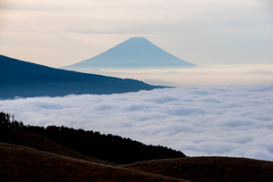 霧ヶ峰高原より雲海に浮かぶ富士山の写真素材 [FYI03184909]