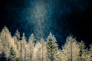 霧ヶ峰高原 朝焼けに染まる針葉樹林とダイヤモンドダストの写真素材 [FYI03185148]