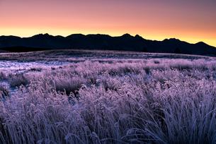 朝焼けに染まる霧氷の霧ヶ峰高原と八ヶ岳連峰の写真素材 [FYI03185150]