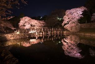 彦根城内堀と大手門橋・桜ライトアップの写真素材 [FYI03185272]