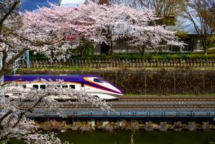 霞城公園の桜と山形新幹線の写真素材 [FYI03185403]