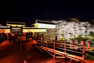 ライトアップの山形城二ノ丸東大手門と夜桜の写真素材 [FYI03185409]
