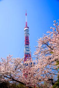 桜と東京タワーの写真素材 [FYI03185451]
