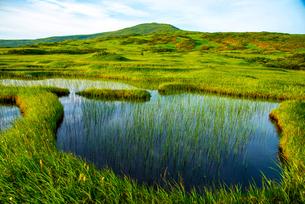 月山弥陀ヶ原湿原より池塘と月山の写真素材 [FYI03185683]