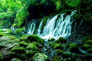 元滝伏流水の写真素材 [FYI03185729]