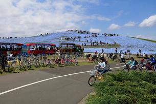 ひたち海浜公園のサイクリングの写真素材 [FYI03185847]