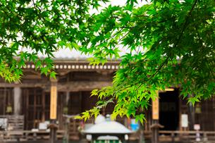 関西花の寺霊場第一番札所 あじさい寺の写真素材 [FYI03185887]