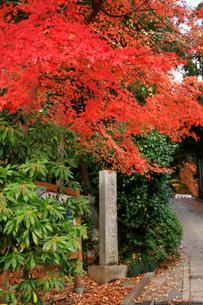 高尾山登山口に立つ東海自然歩道起点の石塔と紅葉の写真素材 [FYI03185926]