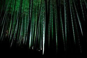 青蓮院の竹林の写真素材 [FYI03185986]