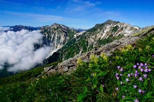 白馬岳の三国境付近に咲くハクサンフウロの写真素材 [FYI03186020]