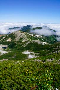 白馬岳のお花畑と朝日岳と清水岳を眺めるの写真素材 [FYI03186028]