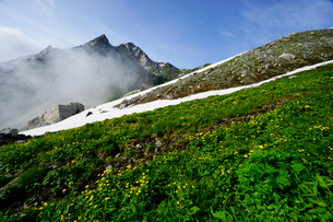 白馬岳山頂付近のお花畑の写真素材 [FYI03186044]