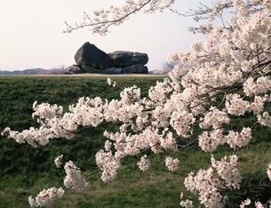 桜と石舞台古墳 奈良県の写真素材 [FYI03186153]