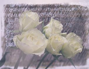 5本のバラと楽譜(白)の写真素材 [FYI03186168]