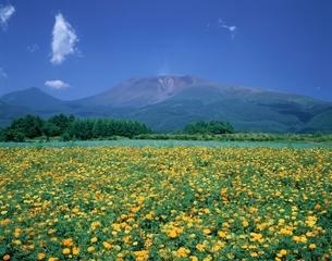 マリーゴールドの花と浅間山    軽井沢町 長野県の写真素材 [FYI03187160]