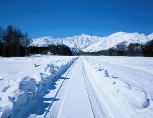雪の一本道と五竜岳   白馬村 長野県の写真素材 [FYI03187161]
