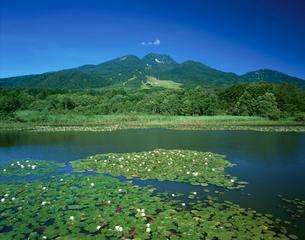 ひつじ草咲くいもり池と妙高山の写真素材 [FYI03187187]