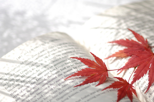 本と紅葉のモミジの写真素材 [FYI03187189]