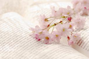 洋書と桜の写真素材 [FYI03187230]