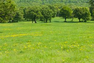 新緑の木々の写真素材 [FYI03187415]
