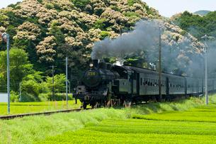大井川鉄道SLの写真素材 [FYI03187530]