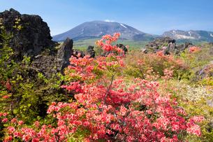 ツツジ咲く浅間山の写真素材 [FYI03187541]