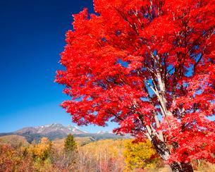紅葉と乗鞍岳の写真素材 [FYI03187572]