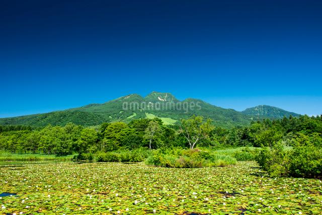 イモリ池と妙高山の写真素材 [FYI03187664]