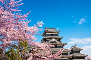 桜咲く松本城の写真素材 [FYI03187768]